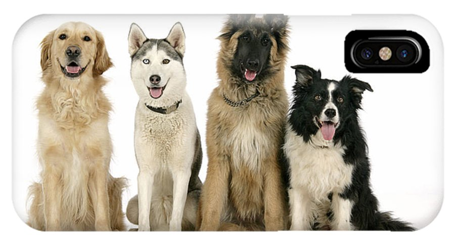Dogs IPhone X / XS Case featuring the photograph Golden Retriever, Husky, Tervuren by John Daniels