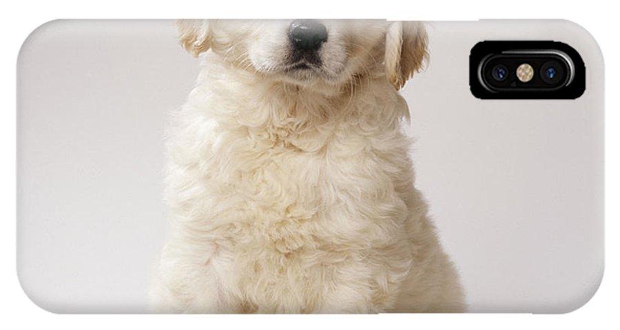 Golden Retriever IPhone X / XS Case featuring the photograph Golden Retriever Puppy by John Daniels