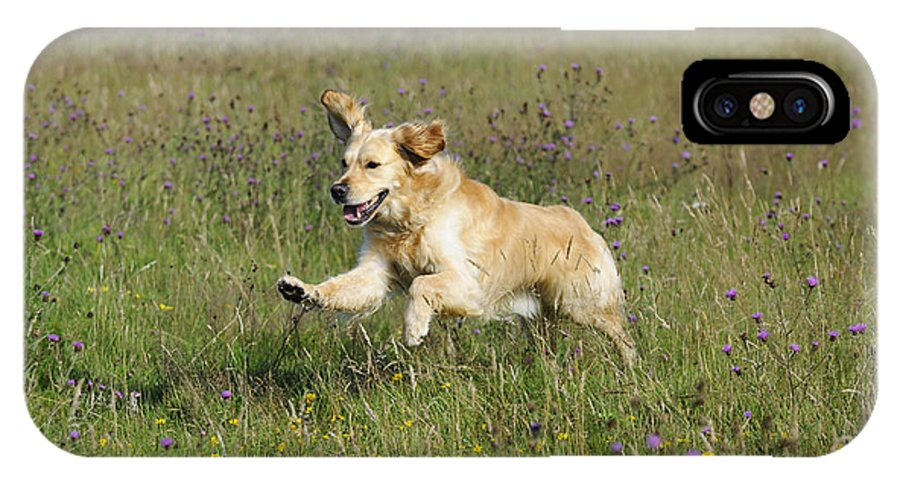 Golden Retriever IPhone X / XS Case featuring the photograph Golden Retriever Running by John Daniels