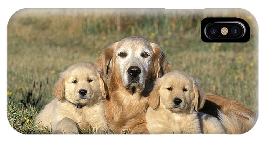 Golden Retriever IPhone X / XS Case featuring the photograph Golden Retriever With Puppies by Rolf Kopfle