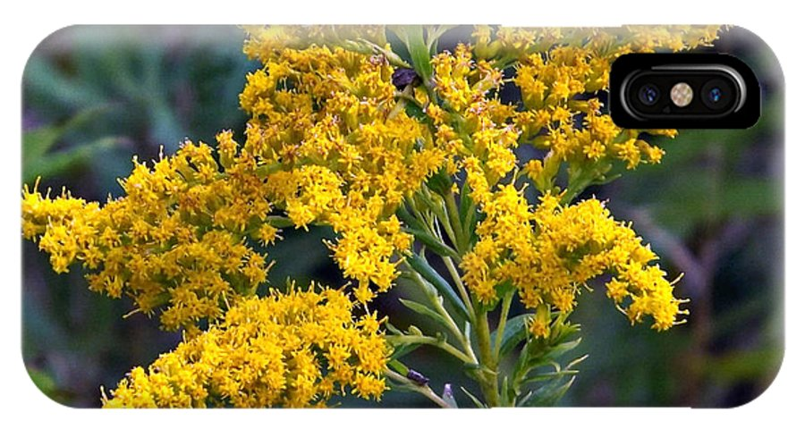 Plant IPhone X Case featuring the photograph Golden Rod by Michael Sokalski