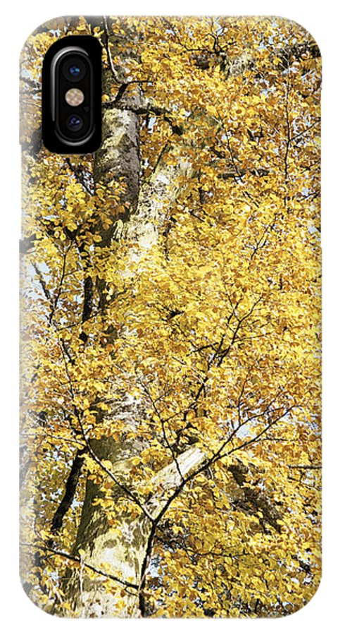 Nature IPhone X Case featuring the photograph Golden Tree by Patrick Kessler