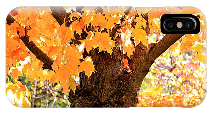 Tree IPhone X Case featuring the photograph Golden Tree by Tammy Hileman