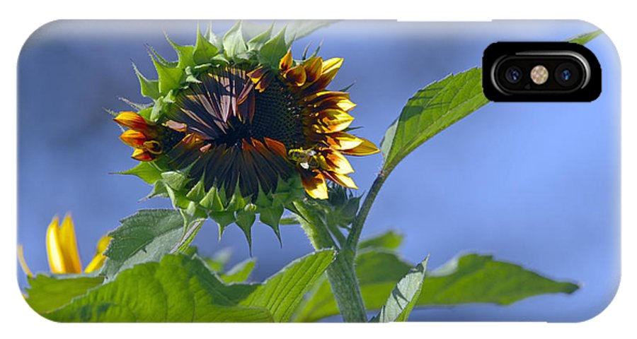 Sunflower IPhone X Case featuring the photograph Good Morning Sunshine by Sharon Talson
