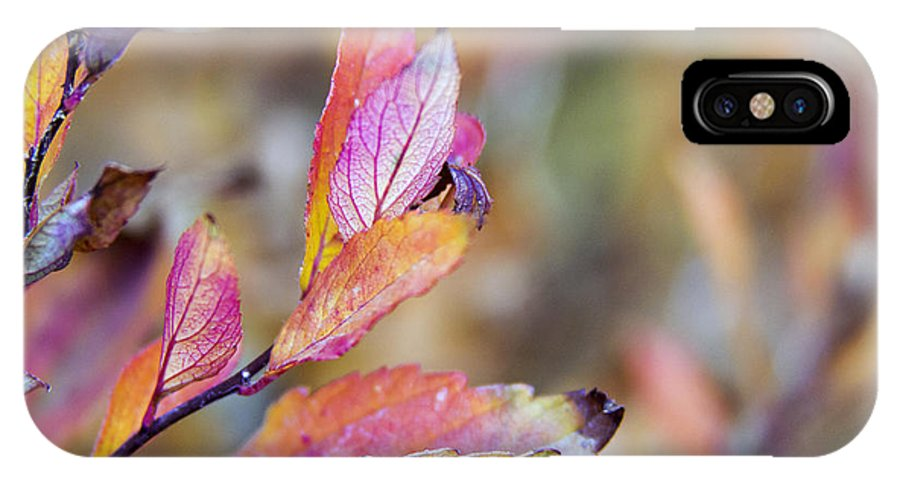 Autumn IPhone X Case featuring the photograph Goodbye To Autumn by Dana Moyer