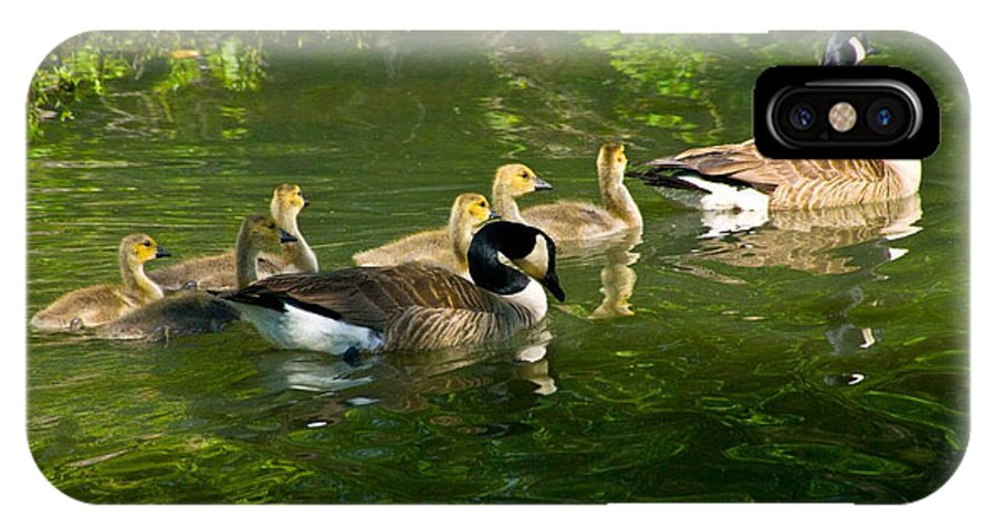 Tulsa Photographs IPhone X Case featuring the photograph Goose Family by Vernis Maxwell