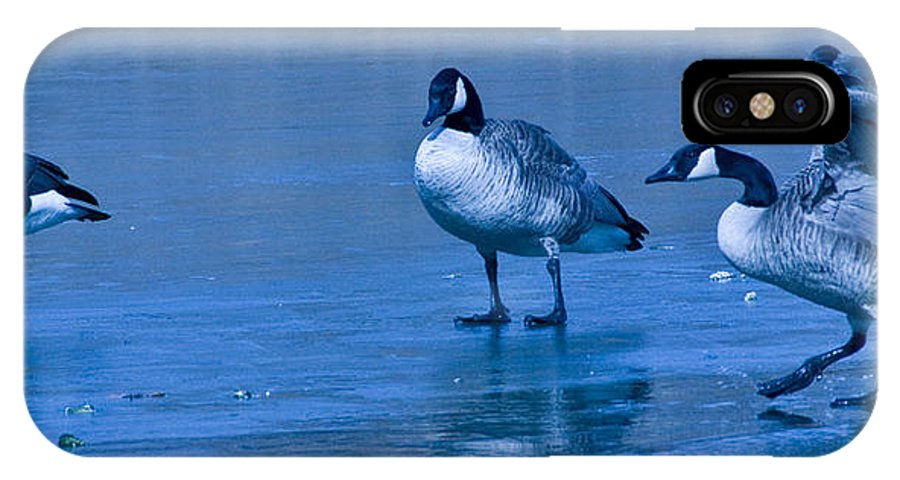 Tulsa Photographs IPhone X Case featuring the photograph Goose Meeting by Vernis Maxwell
