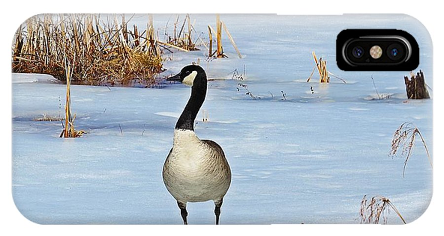 Canadian Goose IPhone X Case featuring the photograph Goose Standing by MTBobbins Photography