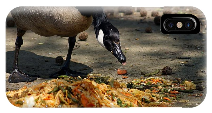 Goose IPhone X Case featuring the photograph Goose Sticking Tongue Out by John Janette