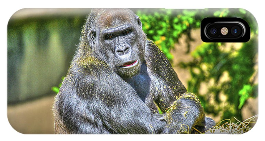 Zoo IPhone X Case featuring the photograph Gorilla by SC Heffner