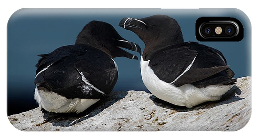 Razorbill IPhone X Case featuring the photograph Gossip Mongers by Brent L Ander