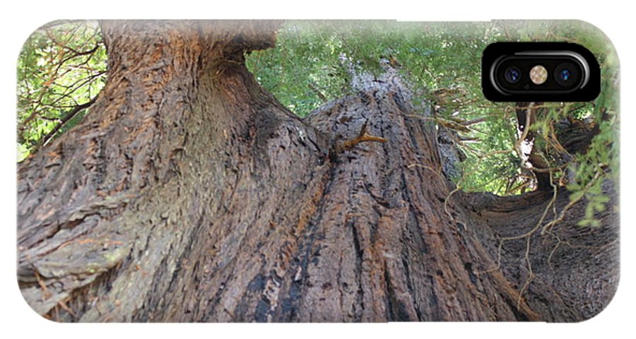 Redwood Trees IPhone X Case featuring the photograph Grandfather Redwood Tree by Richard Mortimer
