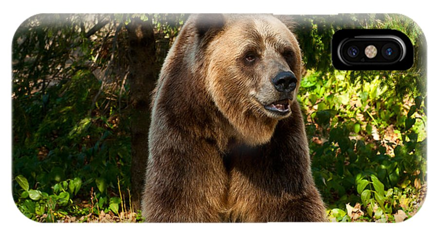 Grizzly IPhone X Case featuring the photograph Grandpa Bear by Les Palenik