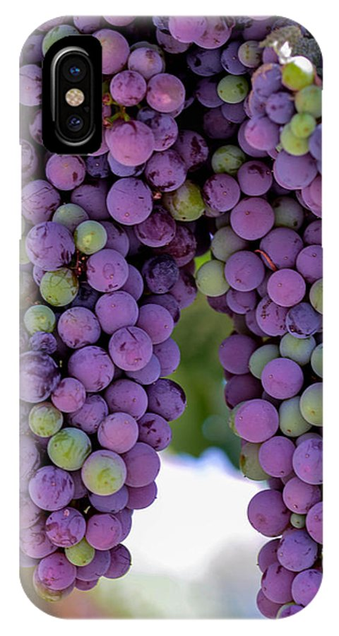 Grape IPhone X Case featuring the photograph Grape Bunches Portrait by Michael Moriarty
