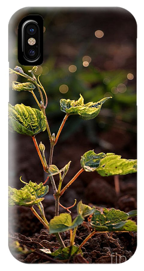 Vineyard IPhone X Case featuring the photograph Grape Leaf In Morning Time by Florea Marius Catalin