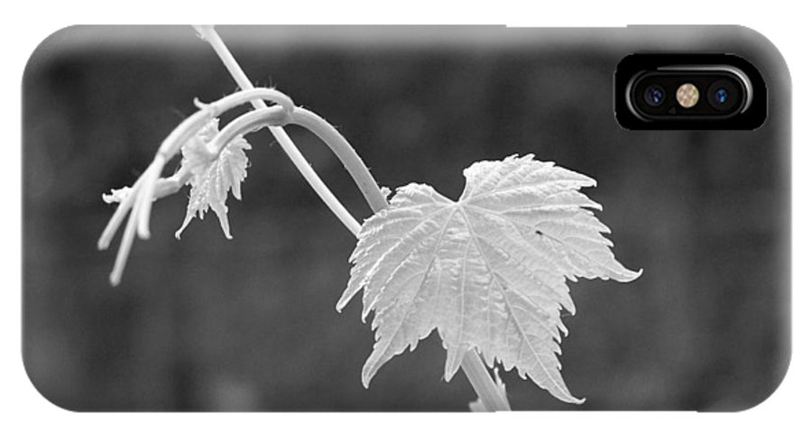 Grape IPhone X Case featuring the photograph Grapevine by Heather L Wright