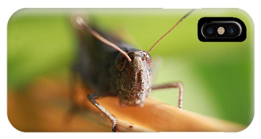Grasshopper IPhone X Case featuring the photograph Grashuepfer by Bernhard Halbauer
