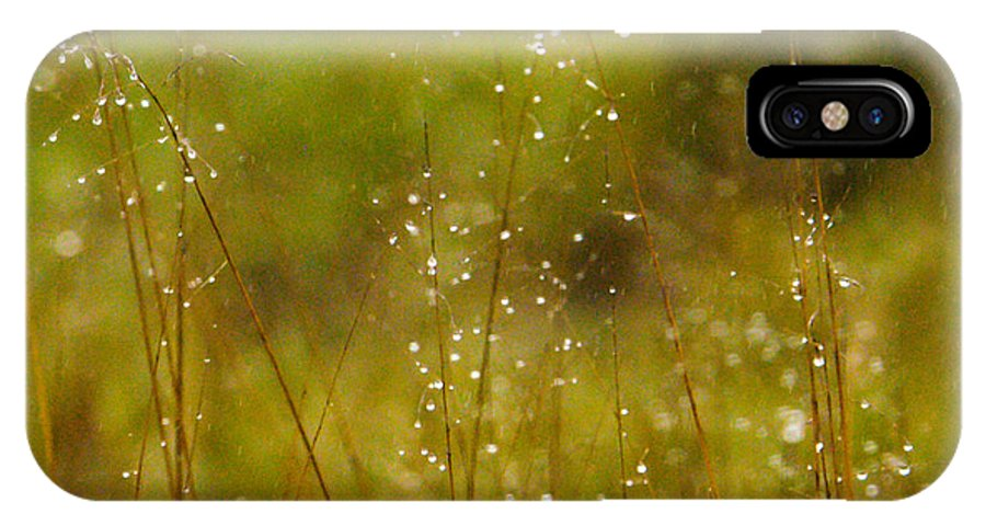 Africa IPhone X Case featuring the photograph Grass Sparkles by Alistair Lyne