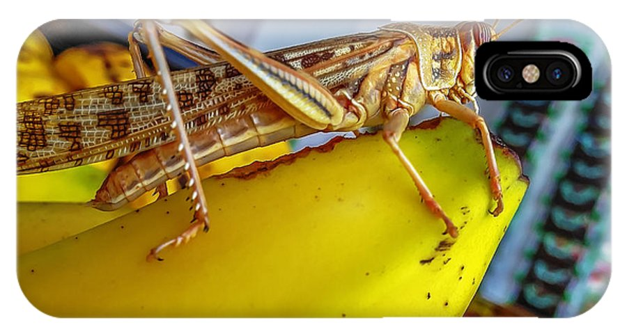 Animal IPhone X / XS Case featuring the photograph Grasshopper by Lik Batonboot