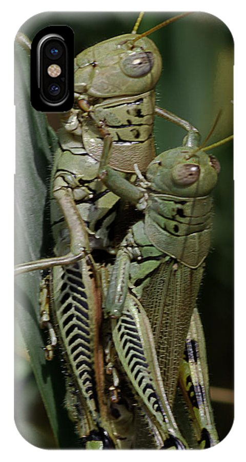 Grasshopper IPhone X Case featuring the photograph Grasshoppers In Love by Lowell Monke