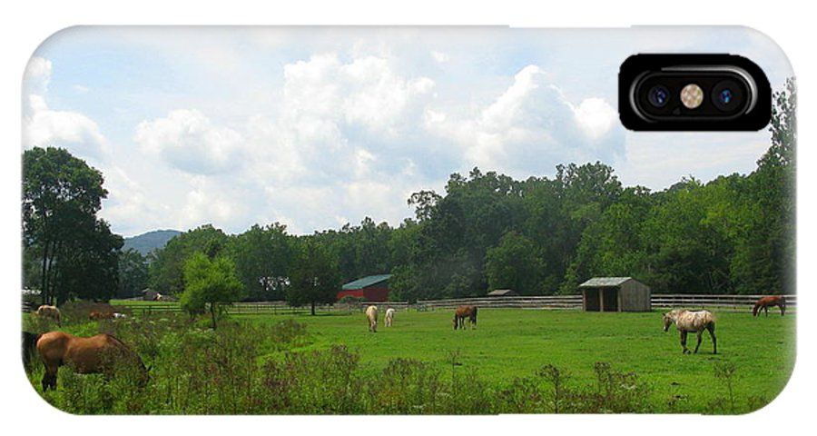 Landscape IPhone X Case featuring the photograph Grazing In The Grass by Laura Corebello
