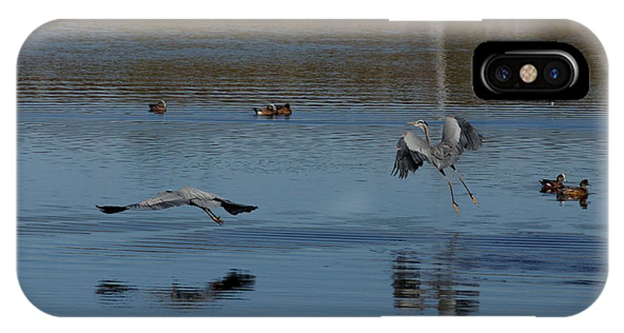 Animals IPhone X Case featuring the photograph Great Blue Dance by Ernie Echols