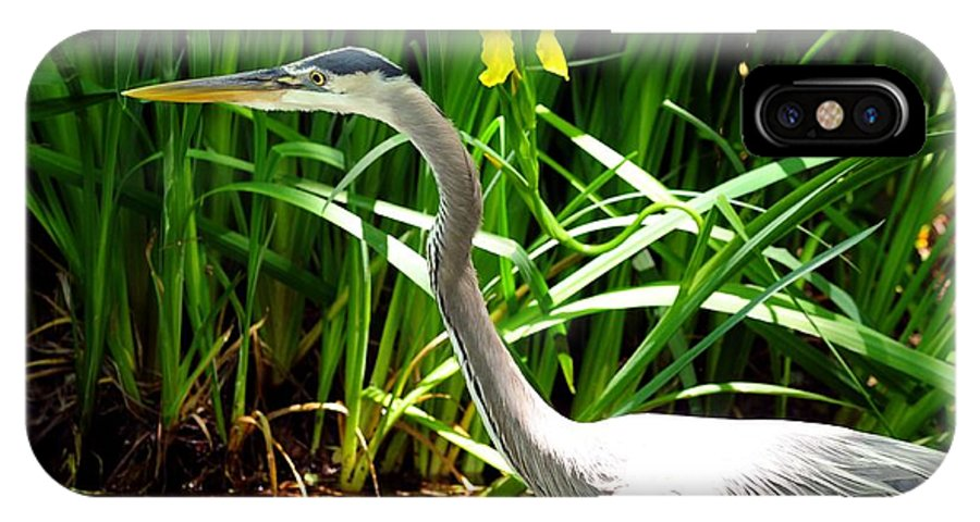 Texas IPhone X Case featuring the photograph Great Blue Heron By Yellow Flower by Marilyn Burton