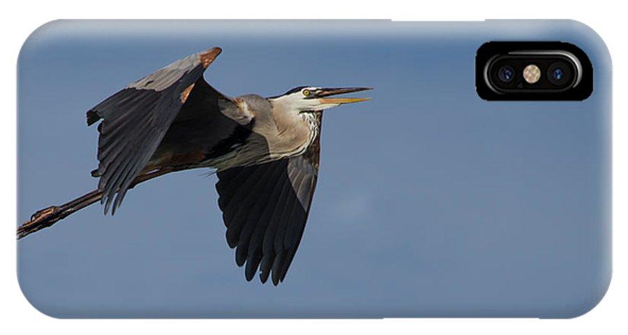 Great Blue Heron In Flight IPhone X Case featuring the photograph Great Blue Heron In Flight by Debra Martz