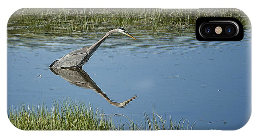 Nature IPhone X Case featuring the photograph Great Blue Heron In Hayden Valley by Bob Dowling