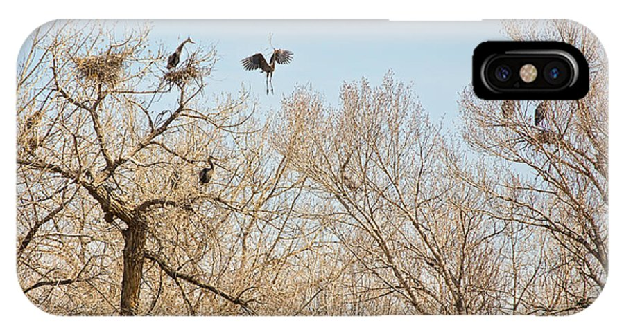 Great Blue Heron IPhone X Case featuring the photograph Great Blue Heron Nest Building 1 by James BO Insogna