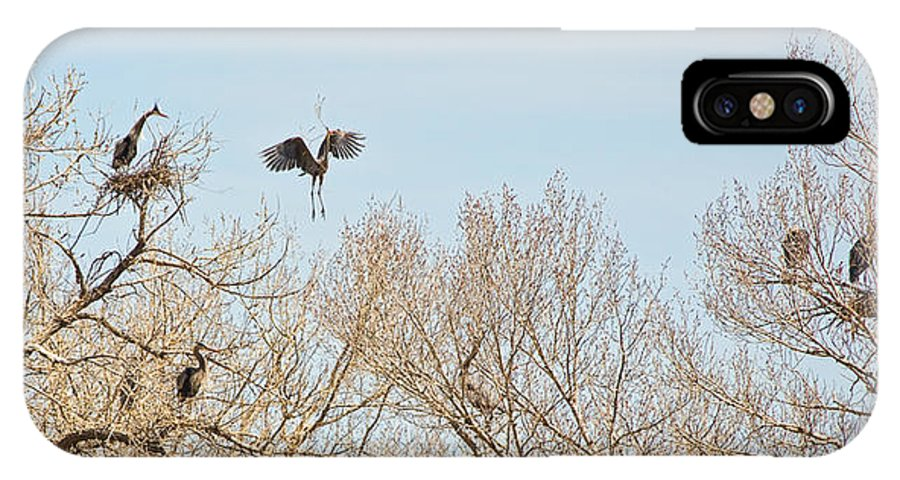 Great Blue Heron IPhone X Case featuring the photograph Great Blue Heron Nest Building 2 Panorama View by James BO Insogna