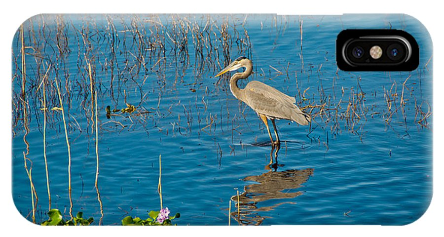 Heron IPhone X Case featuring the photograph Great Blue Heron Wading by Anne Kitzman