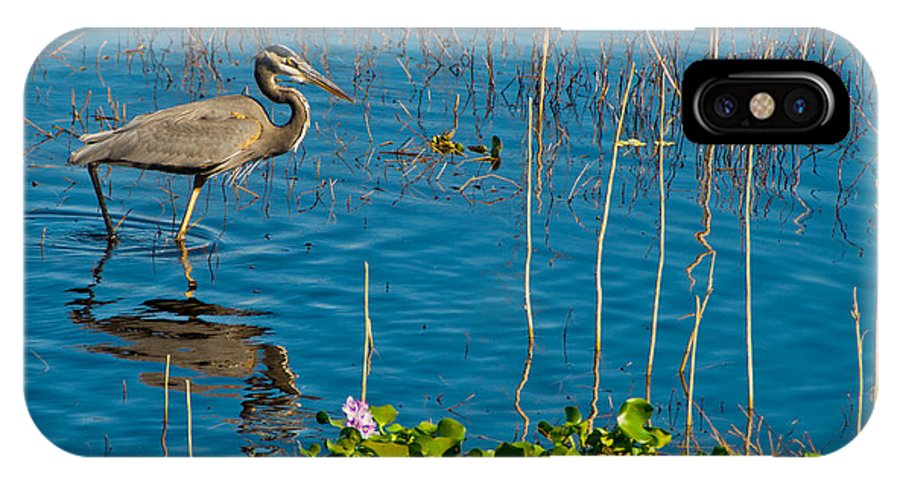 Heron IPhone X Case featuring the photograph Great Blue Heron Wading II by Anne Kitzman