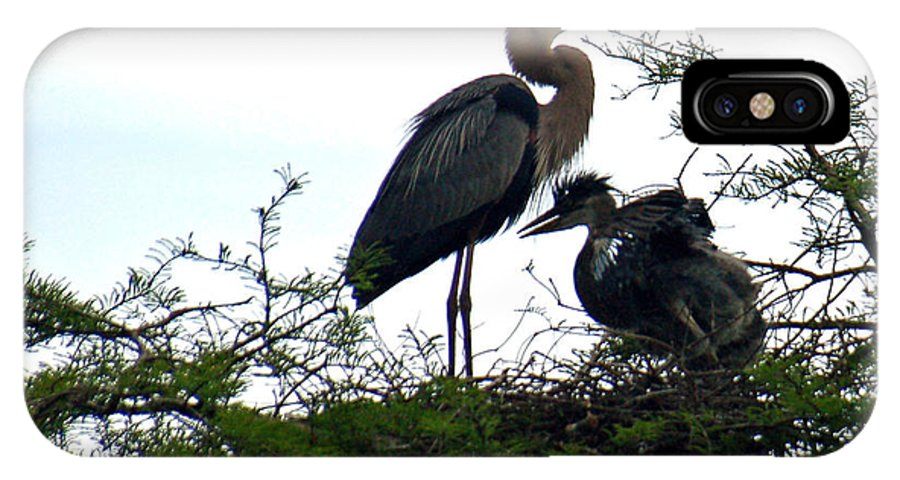 Blue Heron IPhone X Case featuring the photograph Great Blue Heron With Fledglings II by Suzanne Gaff