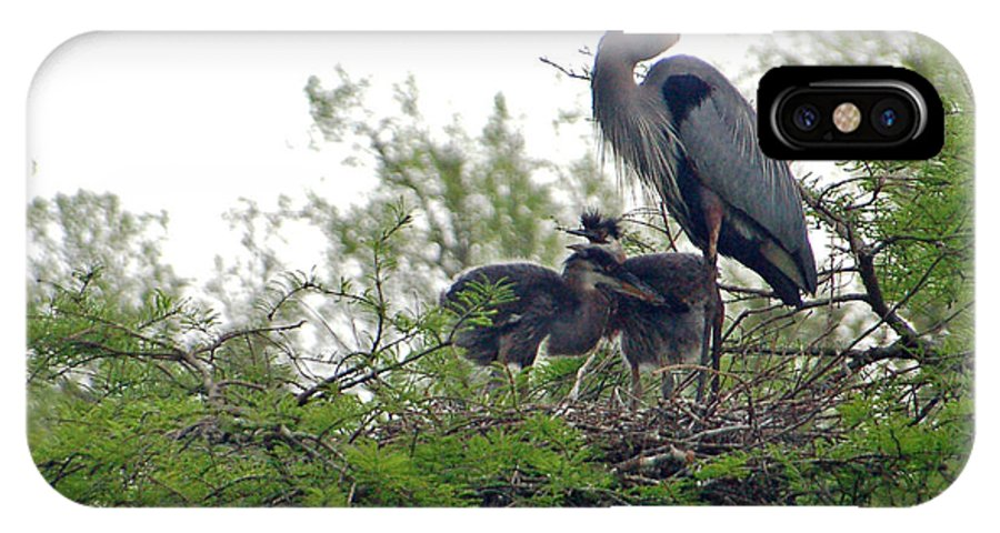 Great Blue Heron IPhone X / XS Case featuring the photograph Great Blue Heron With Fledglings by Suzanne Gaff