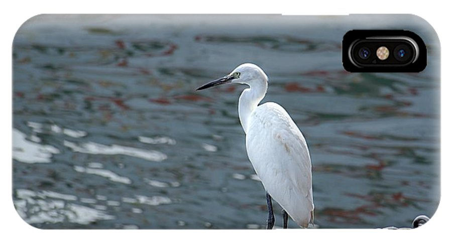 Bird IPhone X Case featuring the photograph Great Egret Bird by Yali Shi