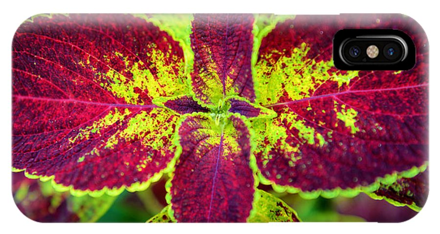 Flower IPhone X Case featuring the photograph Great Expectations Coleus by James Darmawan