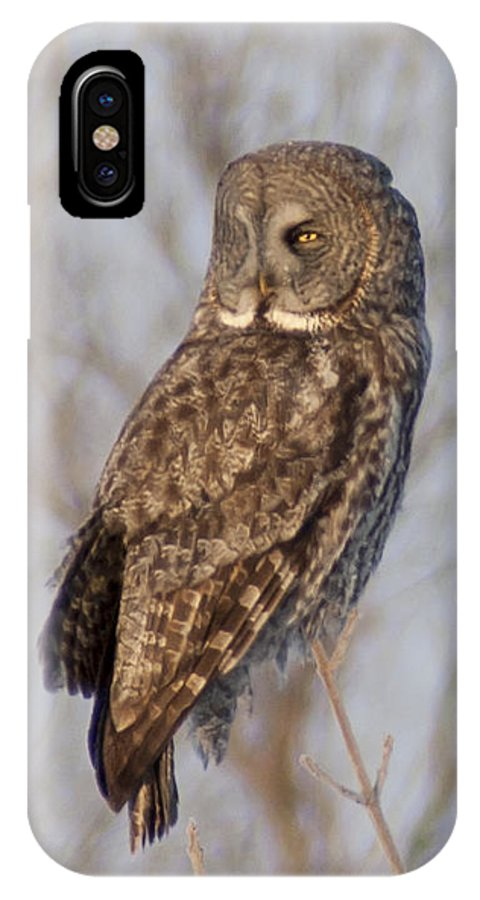 Bird IPhone X Case featuring the photograph Great Grey Owl by Richard Kitchen