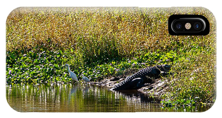 Heron IPhone X Case featuring the photograph Great Herons Wading Near Alligator Sunning by Anne Kitzman