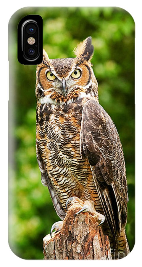 Animal IPhone X / XS Case featuring the photograph Great Horned Owl by David Davis