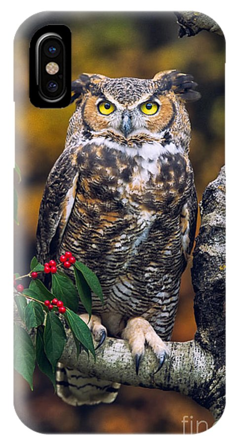 Great Horned Owl Photos IPhone X Case featuring the photograph Great Horned Owl by Todd Bielby