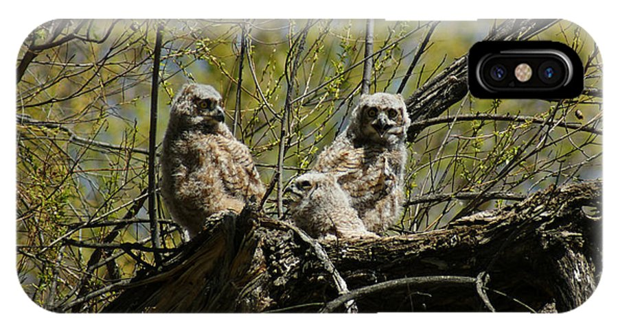 Birds IPhone X Case featuring the photograph Great Horned Owlets 1 by Ernie Echols