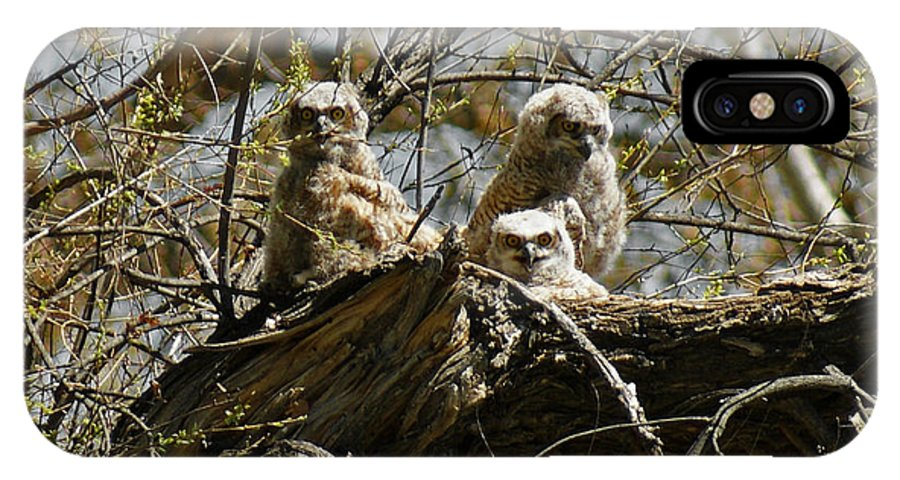 Birds IPhone X Case featuring the photograph Great Horned Owlets Photo by Ernie Echols