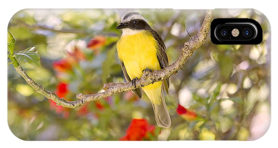 Kiskadee IPhone X Case featuring the photograph Great Kiskadee On A Branch by Peggy Collins