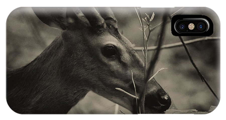 Deer IPhone X / XS Case featuring the photograph Great Smoky Mountains by Jerome Lynch