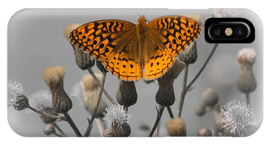 Spangled Fritillary IPhone X Case featuring the photograph Great Spangled Fritillary by Jason Picard