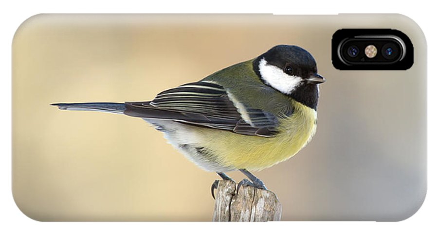 Great Tit IPhone X Case featuring the photograph Great Tit by Torbjorn Swenelius