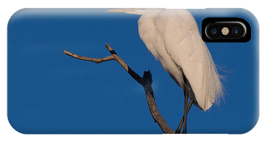 Nature IPhone X Case featuring the photograph Great White Egret On A Snag by Kathleen Bishop
