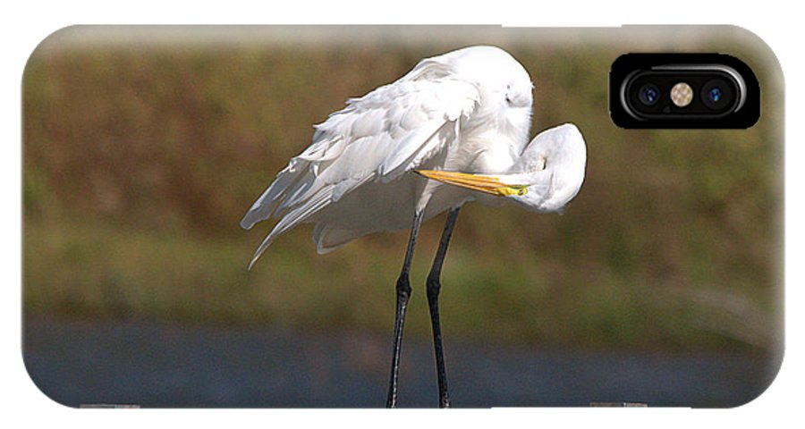 Roy Williams IPhone X Case featuring the photograph Great White Egret Preening by Roy Williams