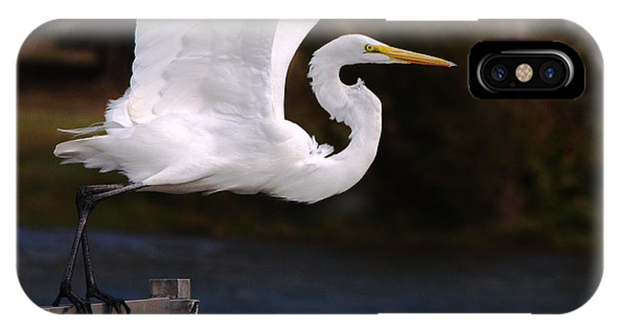 Roy Williams IPhone X Case featuring the photograph Great White Egret Takeoff by Roy Williams